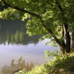 albero-fiume1-150x150