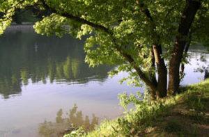albero-fiume1-300x197