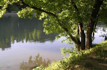 albero-fiume1